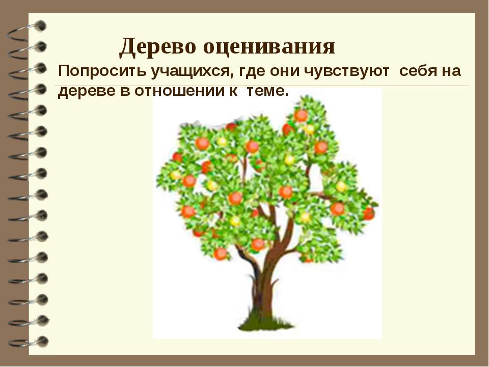 Дерево оценивания Попросить учащихся, где они чувствуют себя на дереве в отно...