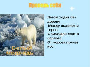 Летом ходит без дороги Между льдинок и торос, А зимой он спит в берлоге, От м