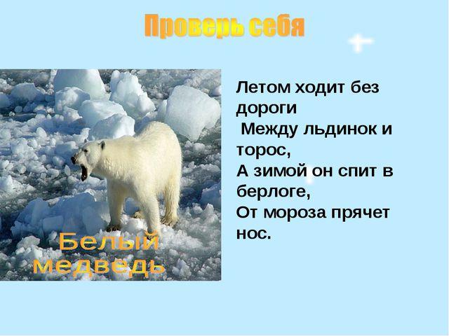 Летом ходит без дороги Между льдинок и торос, А зимой он спит в берлоге, От м...