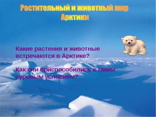 Какие растения и животные встречаются в Арктике? Как они приспособились к так...