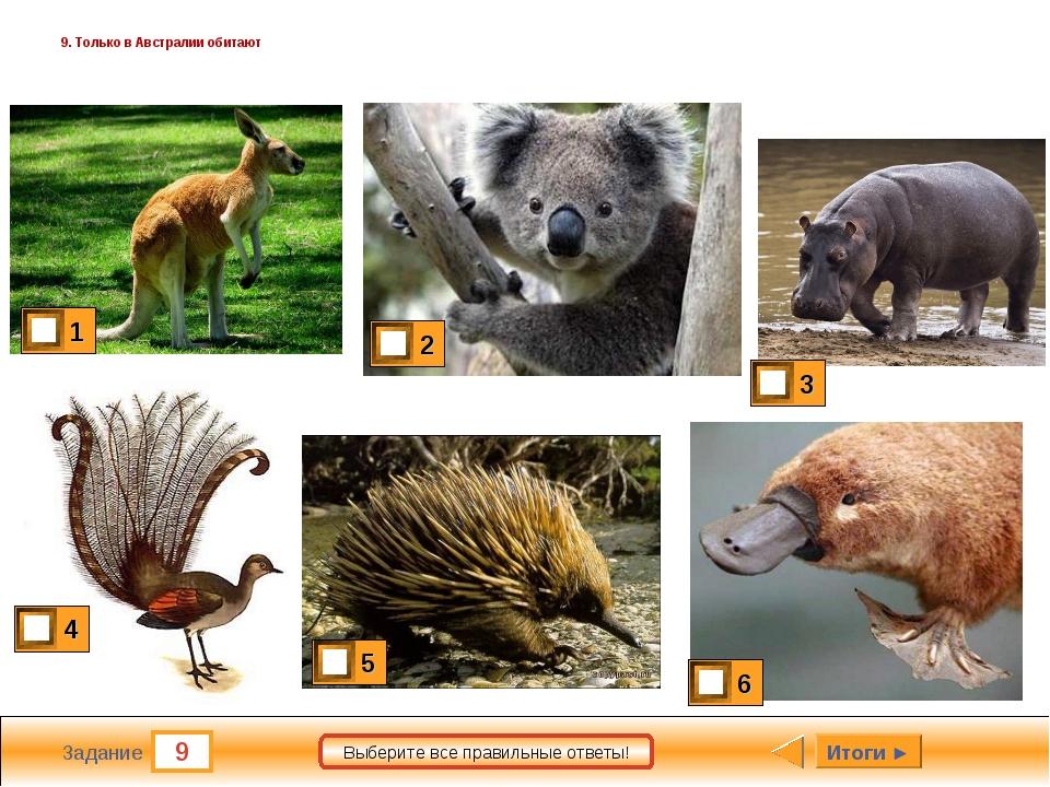 9 Задание Выберите все правильные ответы! 9. Только в Австралии обитают Итоги ►