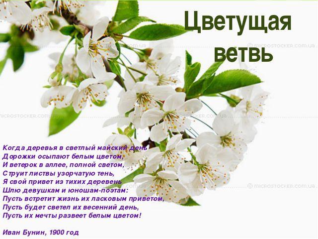 Цветущая ветвь Когда деревья в светлый майский день Дорожки осыпают белым цв...