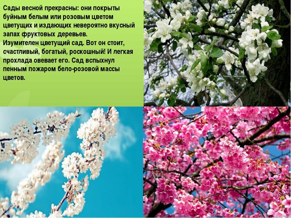 Сады весной прекрасны: они покрыты буйным белым или розовым цветом цветущих и...