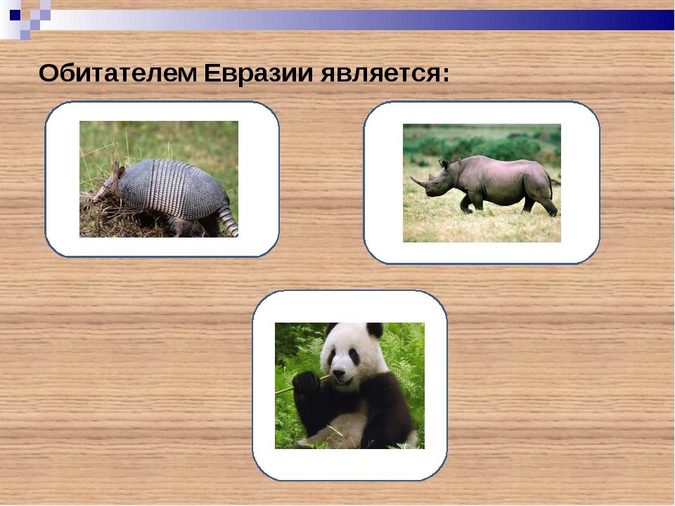 Обитателем Евразии является:
