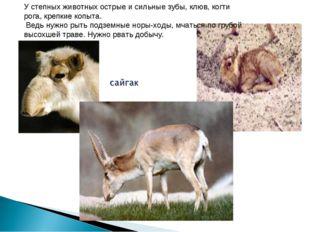 У степных животных острые и сильные зубы, клюв, когти рога, крепкие копыта. В