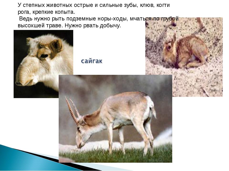 У степных животных острые и сильные зубы, клюв, когти рога, крепкие копыта. В...