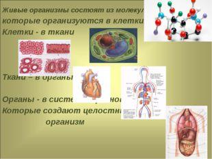 Живые организмы состоят из молекул, которые организуются в клетки, Клетки - в