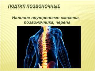 Наличие внутреннего скелета, позвоночника, черепа