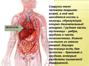 Снаружи тело человека покрыто кожей, а под ней находятся кости и мышцы, образ