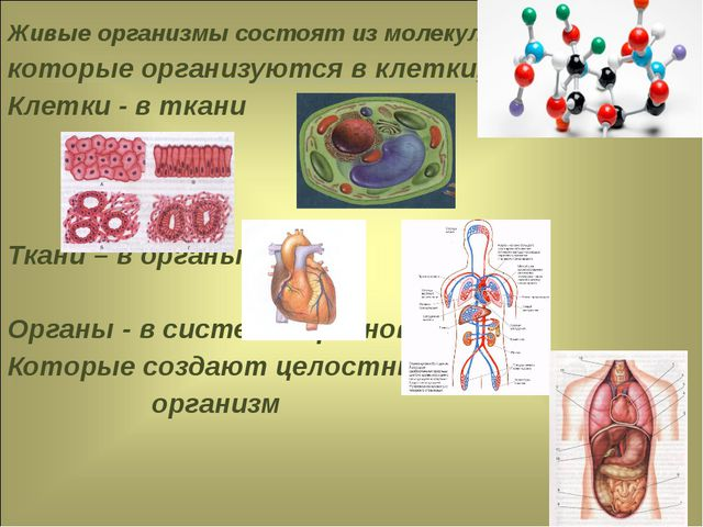 Живые организмы состоят из молекул, которые организуются в клетки, Клетки - в...