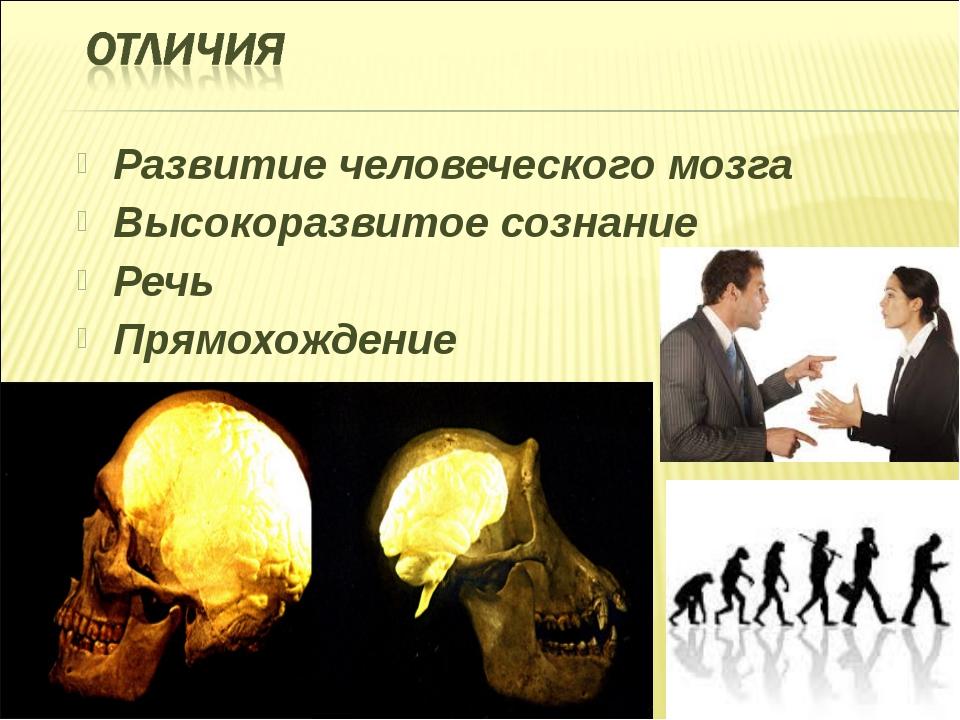 Развитие человеческого мозга Высокоразвитое сознание Речь Прямохождение