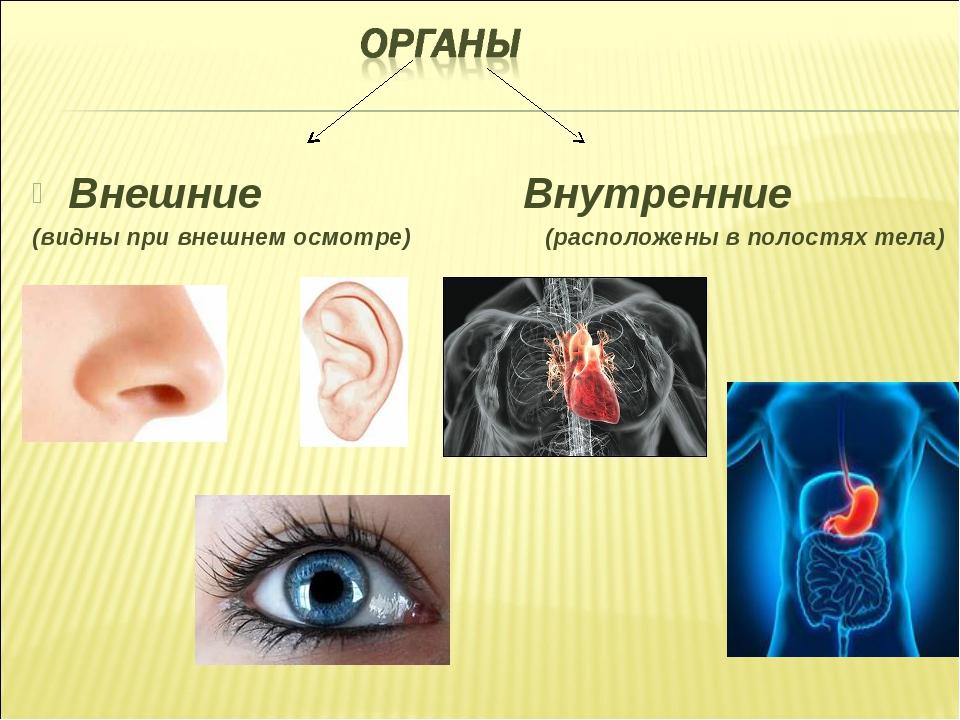Внешние Внутренние (видны при внешнем осмотре) (расположены в полостях тела)
