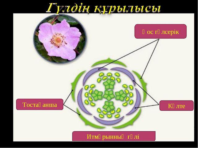 Тостағанша Күлте Итмұрынның гүлі Қос гүлсерік