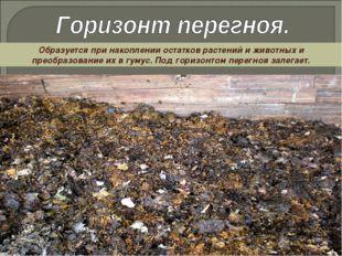 Образуется при накоплении остатков растений и животных и преобразование их в