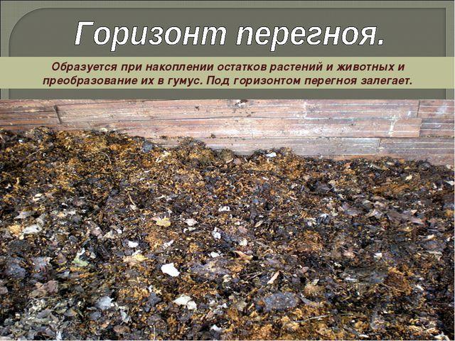 Образуется при накоплении остатков растений и животных и преобразование их в...
