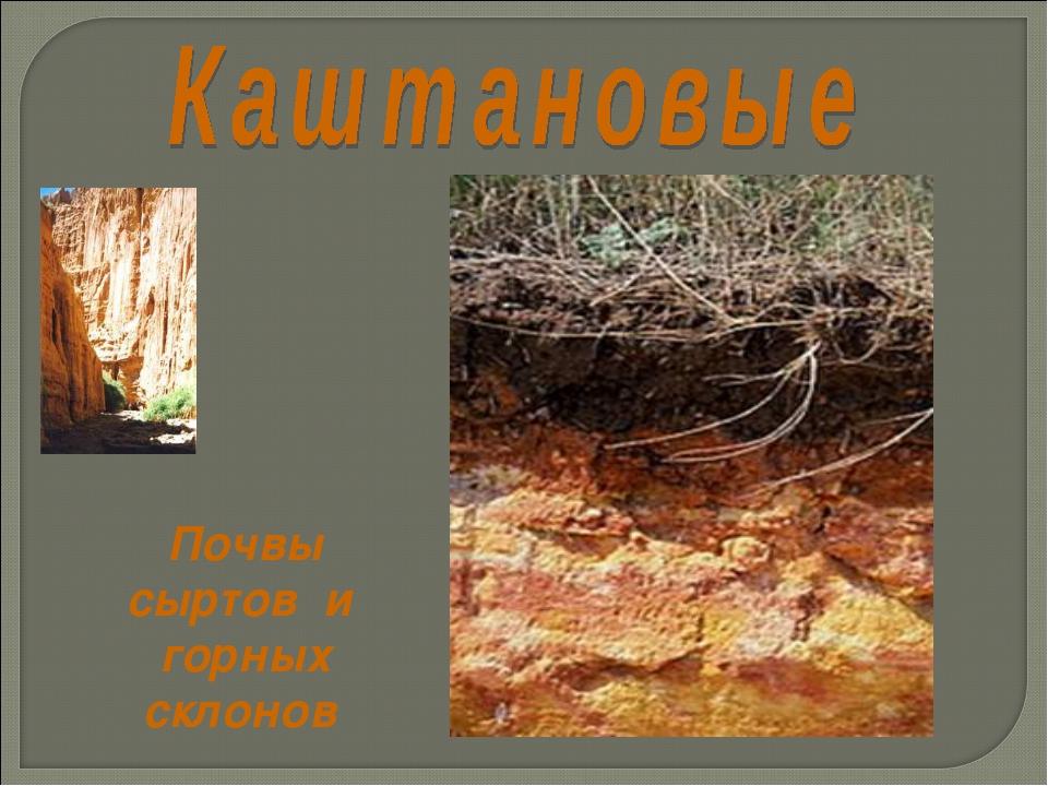 Почвы сыртов и горных склонов
