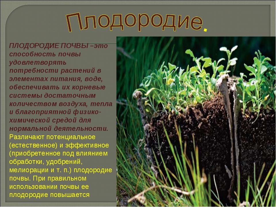 ПЛОДОРОДИЕ ПОЧВЫ –это способность почвы удовлетворять потребности растений в...