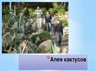 Алея кактусов