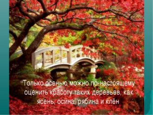 Только осенью можно по-настоящему оценить красоту таких деревьев, как ясень,