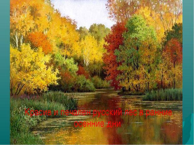 Красив и печален русский лес в ранние осенние дни