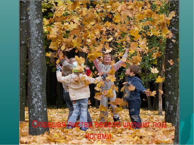 Опавшая листва весело шуршит под ногами.