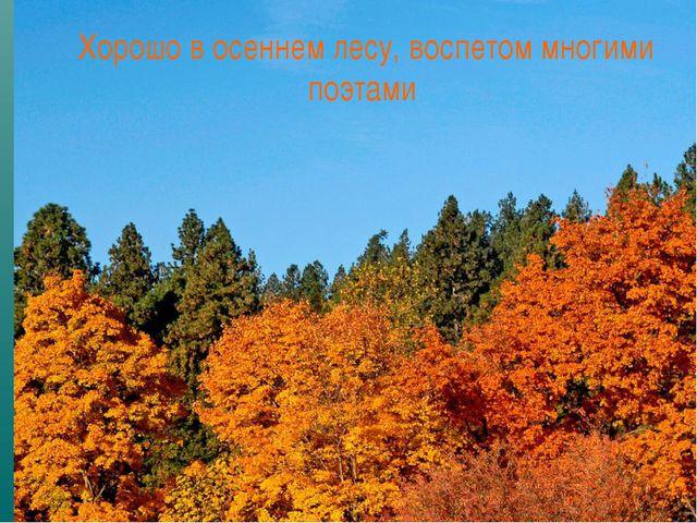 Хорошо в осеннем лесу, воспетом многими поэтами
