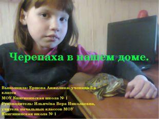 Черепаха в нашем доме. Выполнила: Ершова Анжелика- ученица 3 а класса МОУ Кня