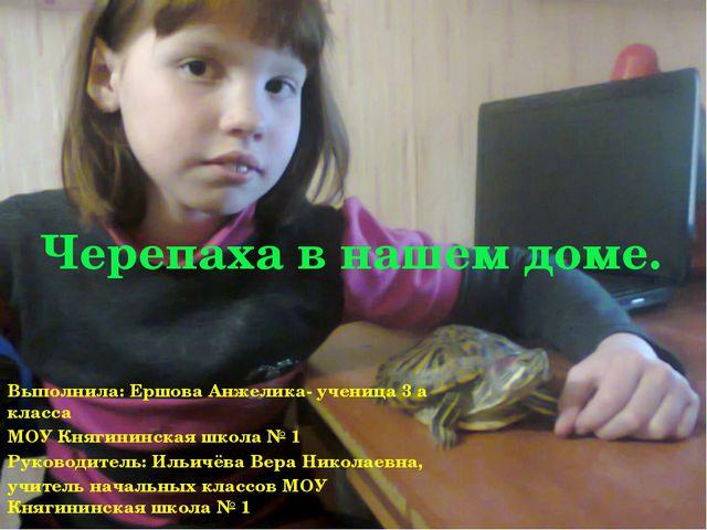 Черепаха в нашем доме. Выполнила: Ершова Анжелика- ученица 3 а класса МОУ Кня...