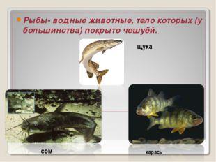 Рыбы- водные животные, тело которых (у большинства) покрыто чешуёй. щука сом
