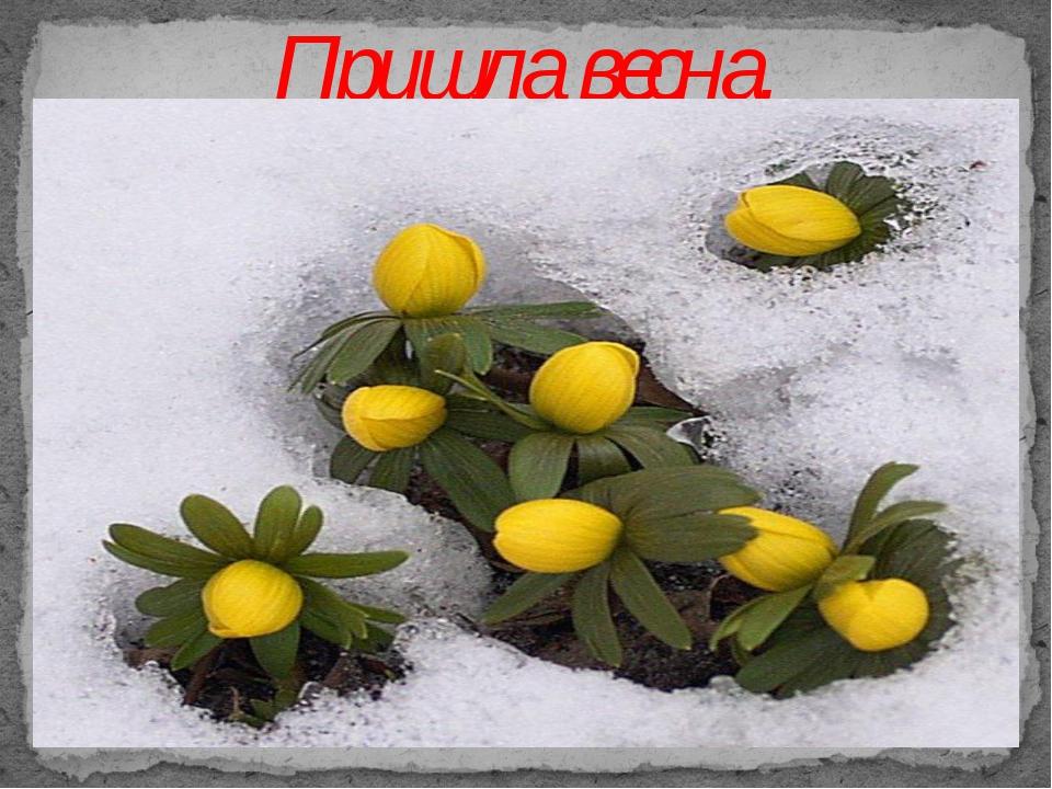 Пришла весна.