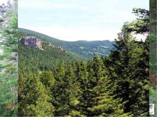 Лесистость США - 33%. По площади лесов США занимает 4 место в мире после Росс