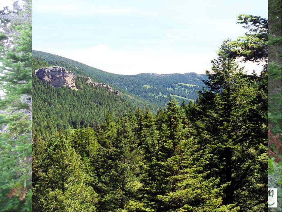 Лесистость США - 33%. По площади лесов США занимает 4 место в мире после Росс...