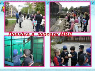 Поездка в зоопарк МВД