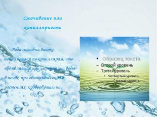 Смачивание или капиллярность Вода способна высоко подниматься по капиллярам,