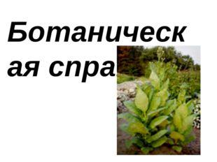 Ботанuческая сnравка