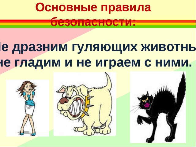 Основные правила безопасности: Не дразним гуляющих животных, не гладим и не и...