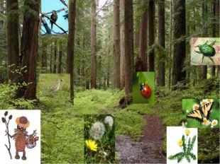 Одним из главных богатств нашего народа является -лес.