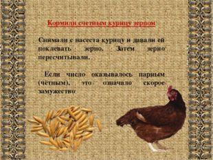Кормили счетным курицу зерном Снимали с насеста курицу и давали ей поклевать