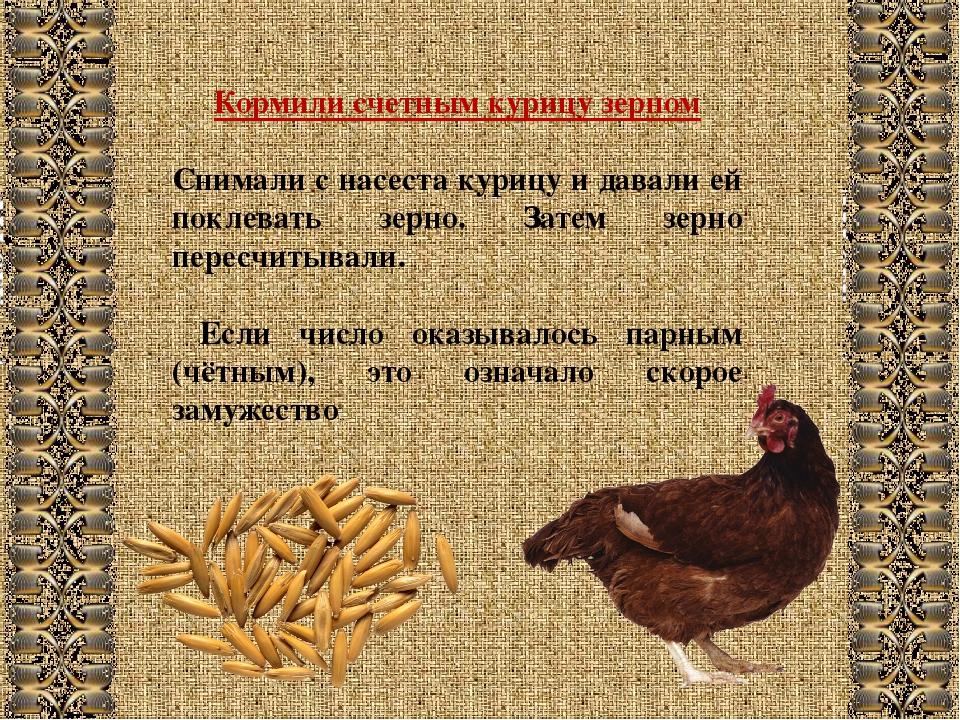 Кормили счетным курицу зерном Снимали с насеста курицу и давали ей поклевать...