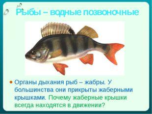 Рыбы – водные позвоночные Органы дыхания рыб – жабры. У большинства они прикр