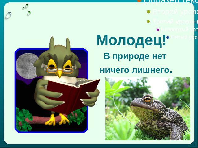Использованы фото из Интернета Спасибо за внимание! Данную презентацию выполн...