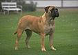 media/source_pictures/dog.zip