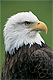 media/source_pictures/eagle.zip