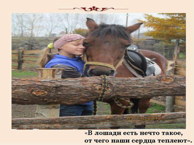 «В лошади есть нечто такое, от чего наши сердца теплеют».