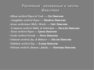 -Allium vavilovii Popov & Vved. — Лук Вавилова - Amygdalus vavilovii Popov —