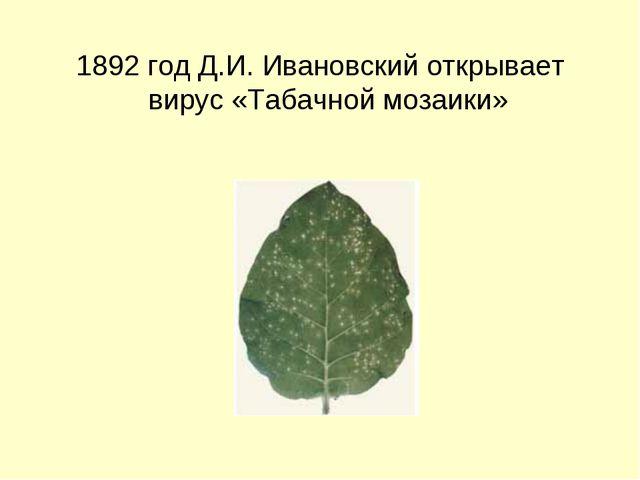 1892 год Д.И. Ивановский открывает вирус «Табачной мозаики»