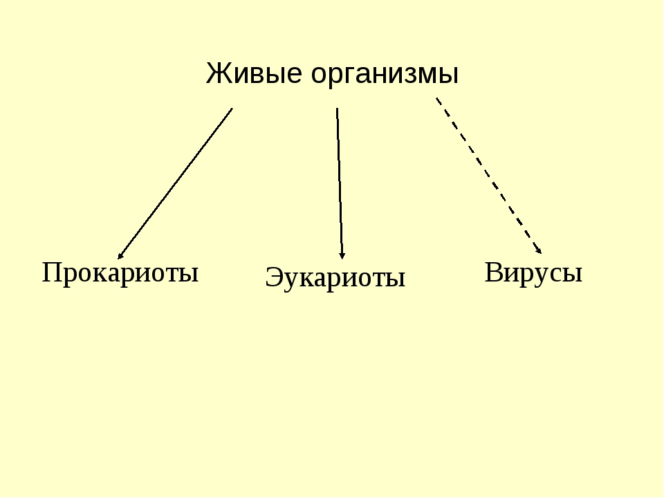Живые организмы Прокариоты Эукариоты Вирусы