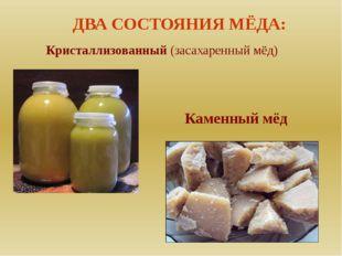 Кристаллизованный (засахаренный мёд) ДВА СОСТОЯНИЯ МЁДА: Каменный мёд