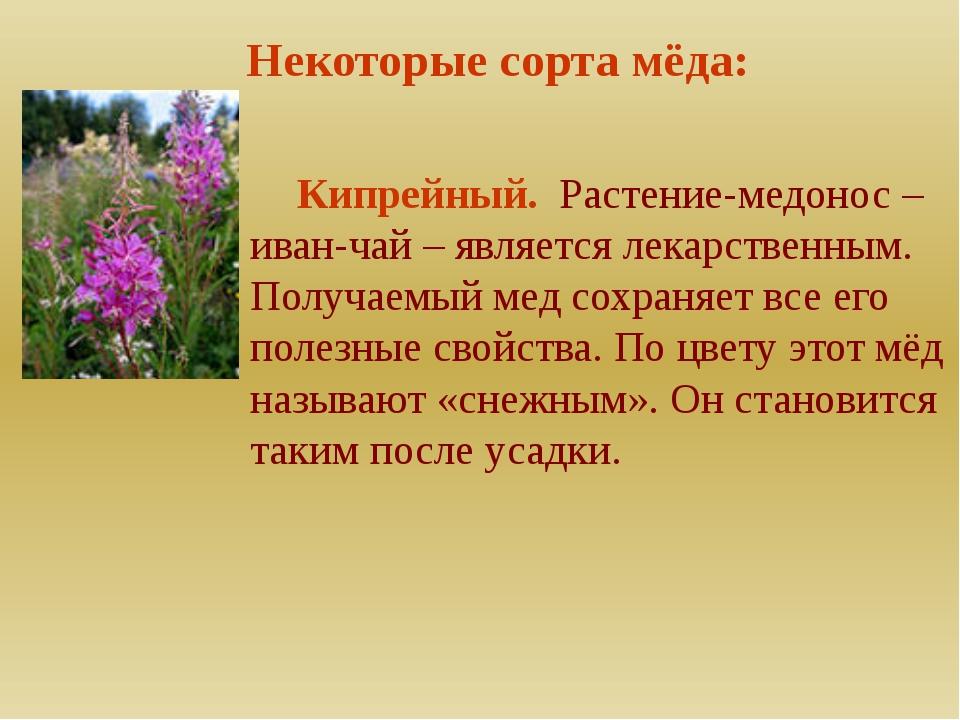 Некоторые сорта мёда: Кипрейный. Растение-медонос – иван-чай – является лека...
