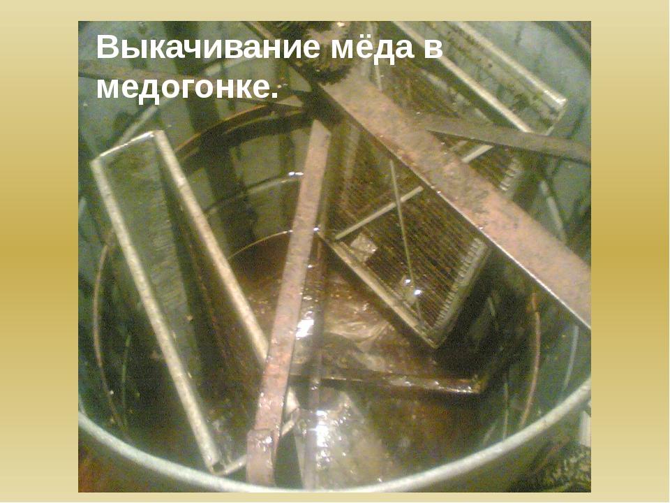 Выкачивание мёда в медогонке.